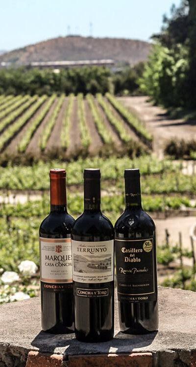 concha-y-toro-winery-607594